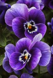 Image result for flowers purple